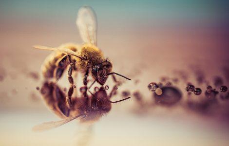 Oxybee Bee