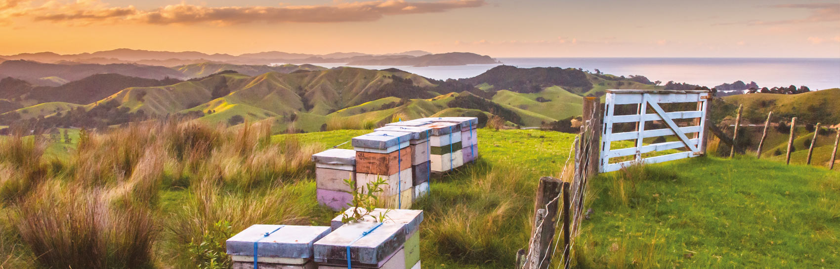 VP-apiculture2-0