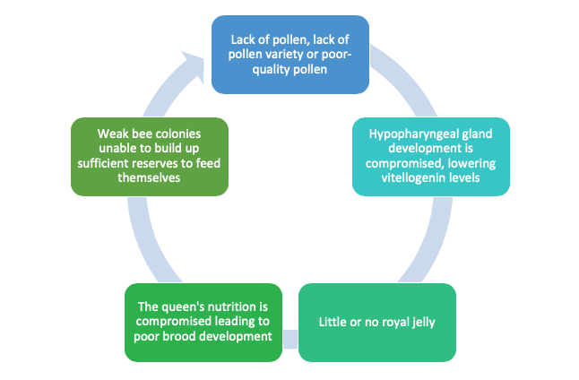 Vicious circle of protein deficiency