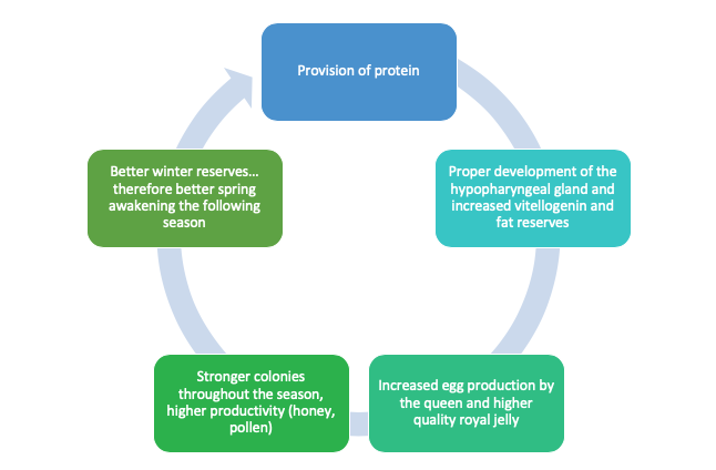 Virtuous circle of providing protein