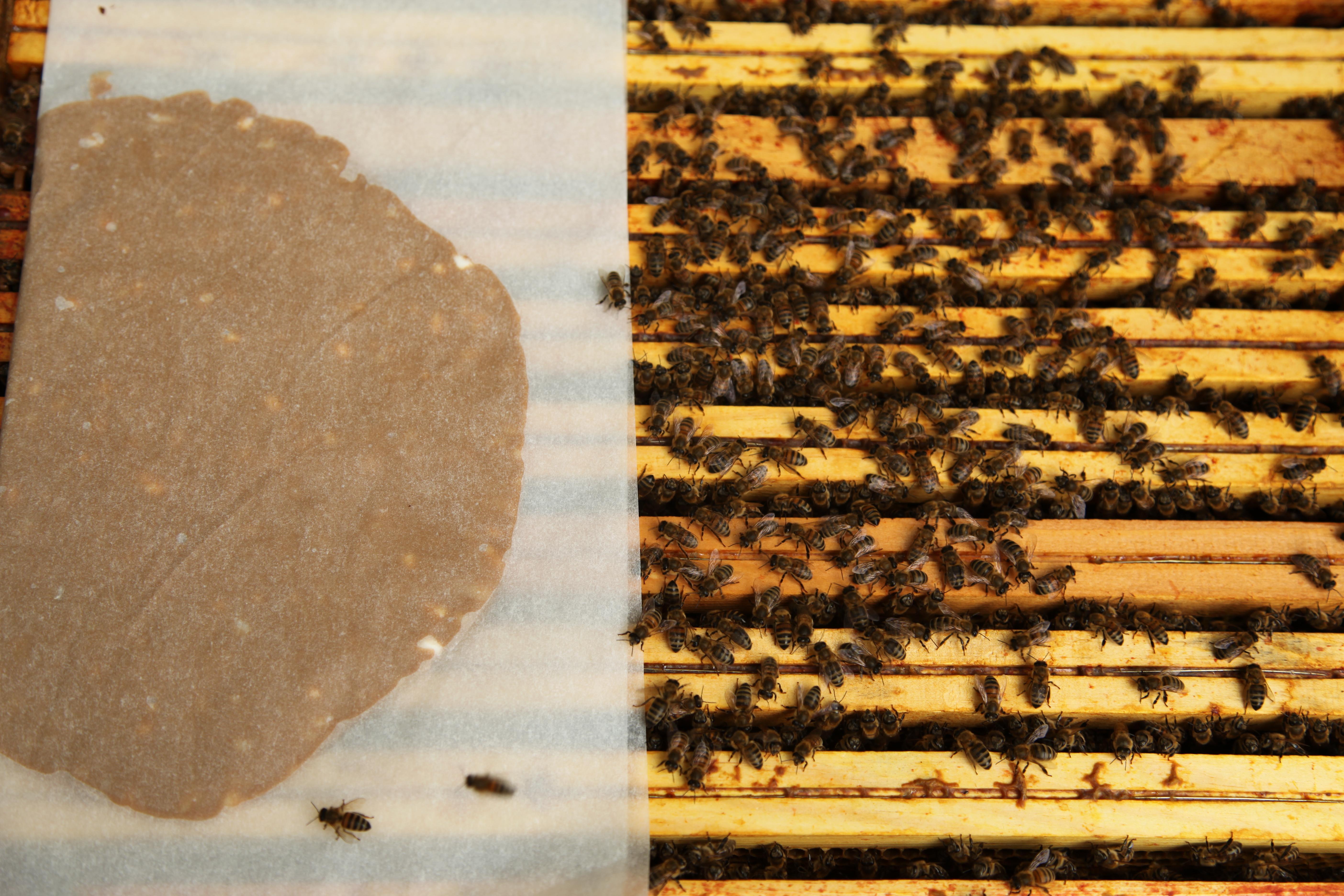 Pâte protéinée nutrition abeilles