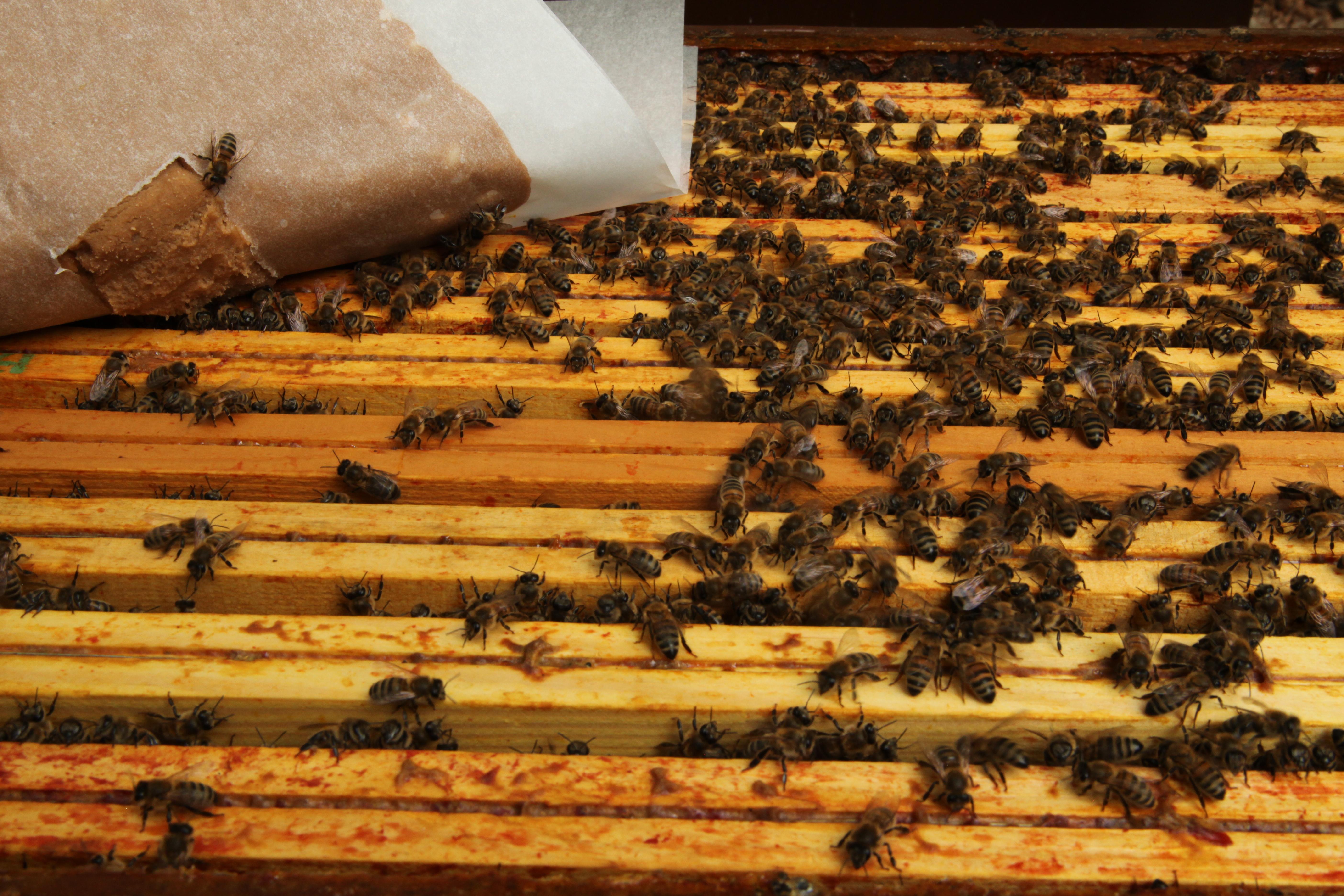 Nutrition ruche abeilles
