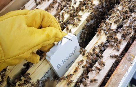 B-keep Hive