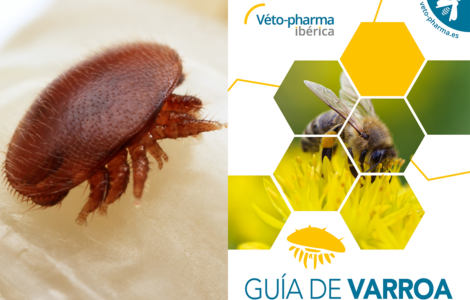 Guia Varroa picture
